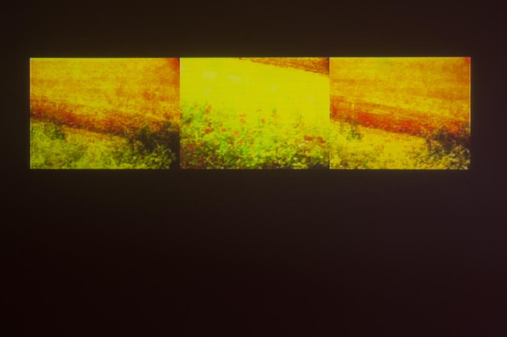 Legrice230112SC05
